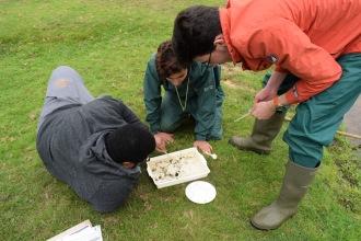 Osama, Abdulla, and Sam. Investigating freshwater environments